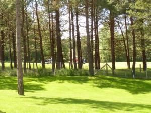 Gîte La Florentine à Hardelot - Vue sur les pins